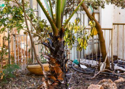 Garden Moriah after fire